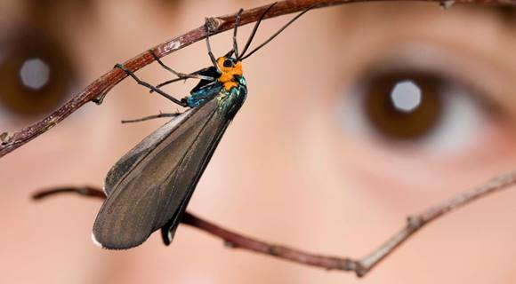 EYFS image- insect